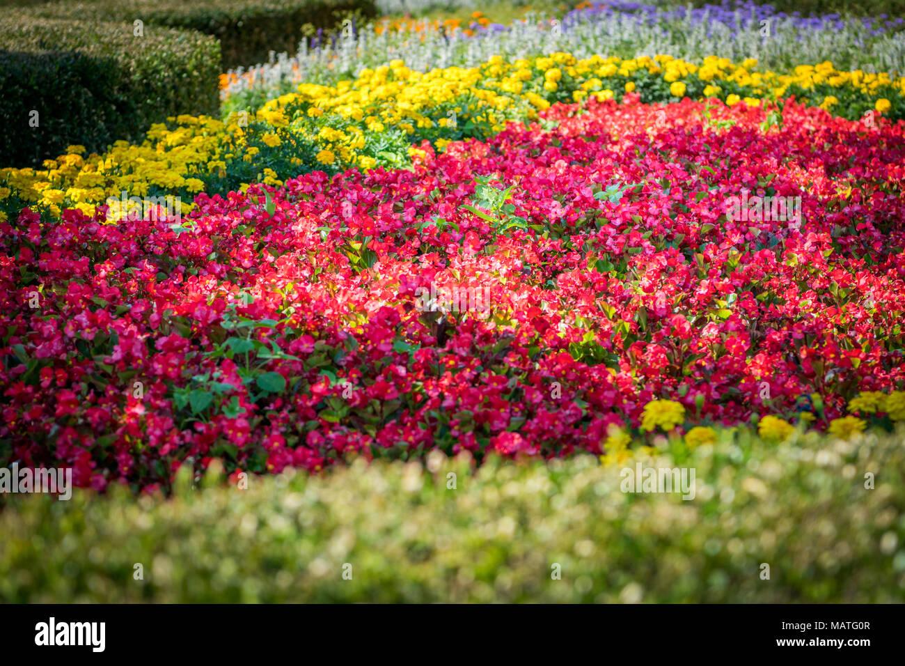 Colorful Flower Bushes In Grassalkovich Garden Stock Photo