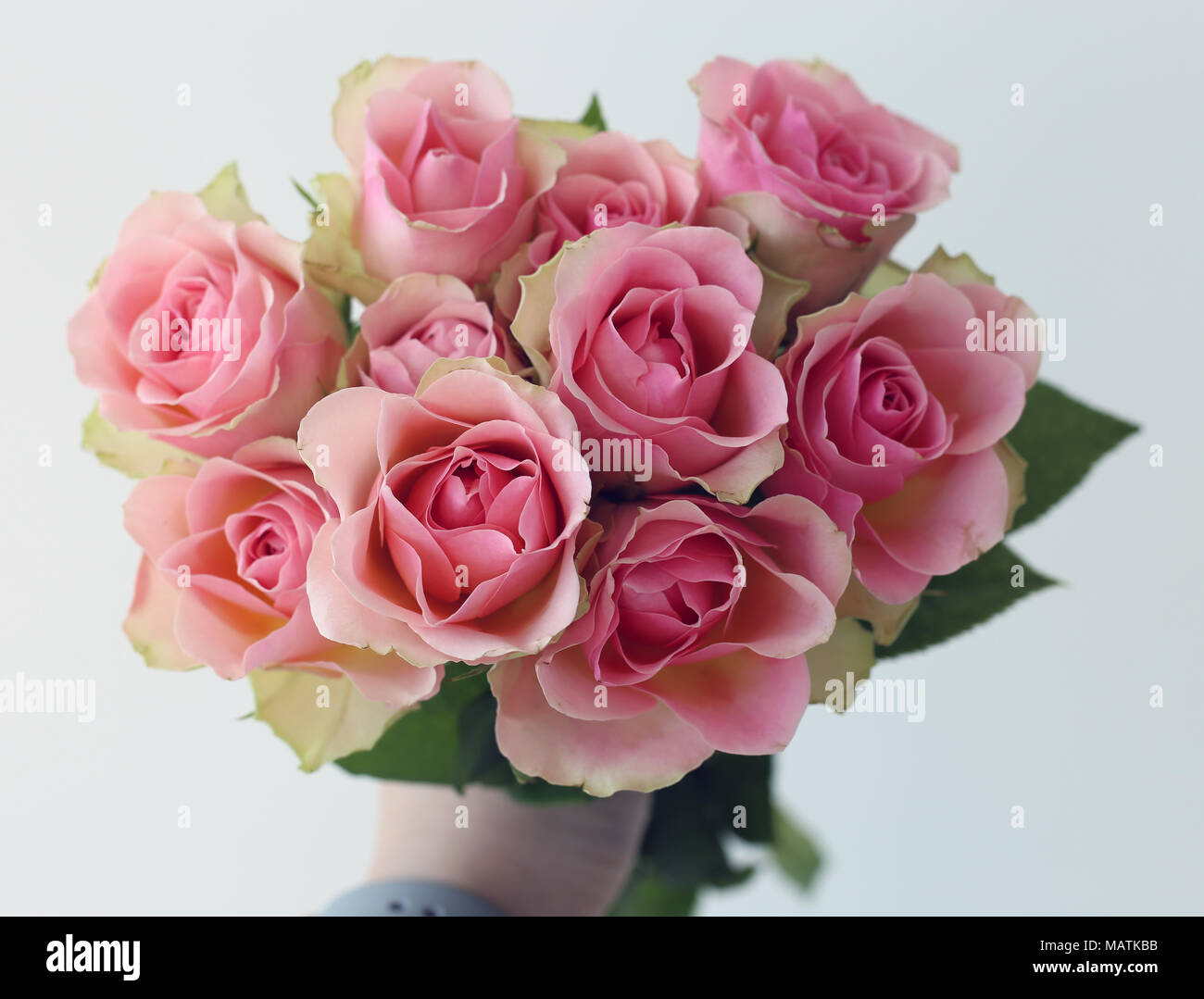 A Bouquet Made Of Light Pink Blush Colored Roses Held By A Hand Of