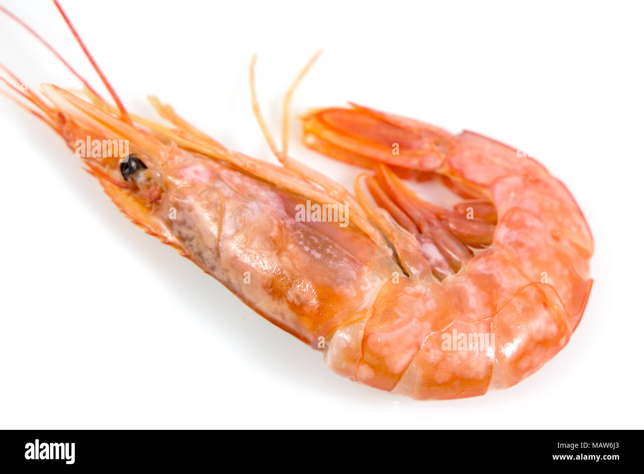 Fresh Prawn Or Fresh Shrimp Isolated On White Background Food