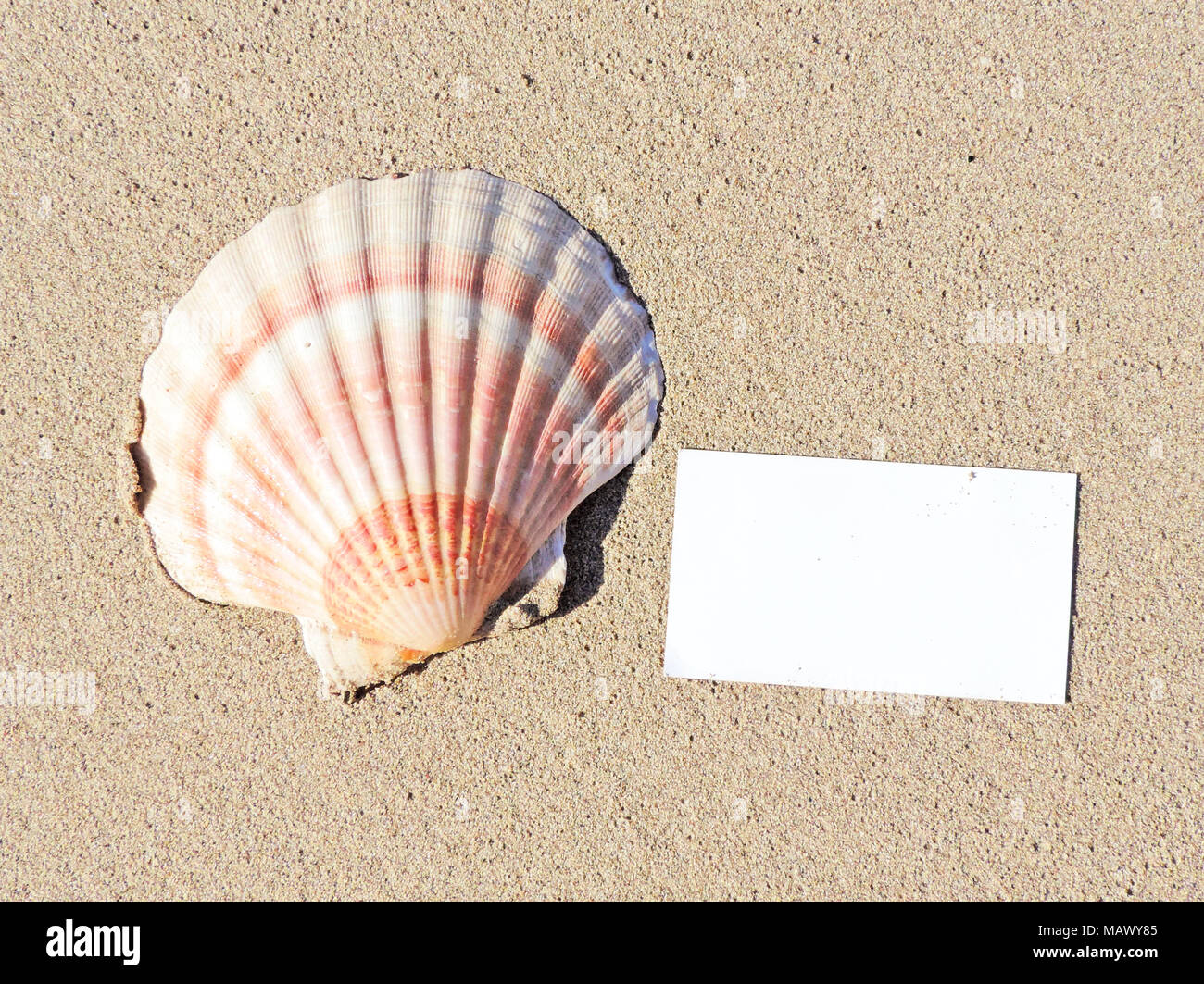 Blank White Card Or Greeting Card On The Beach With Copy Space