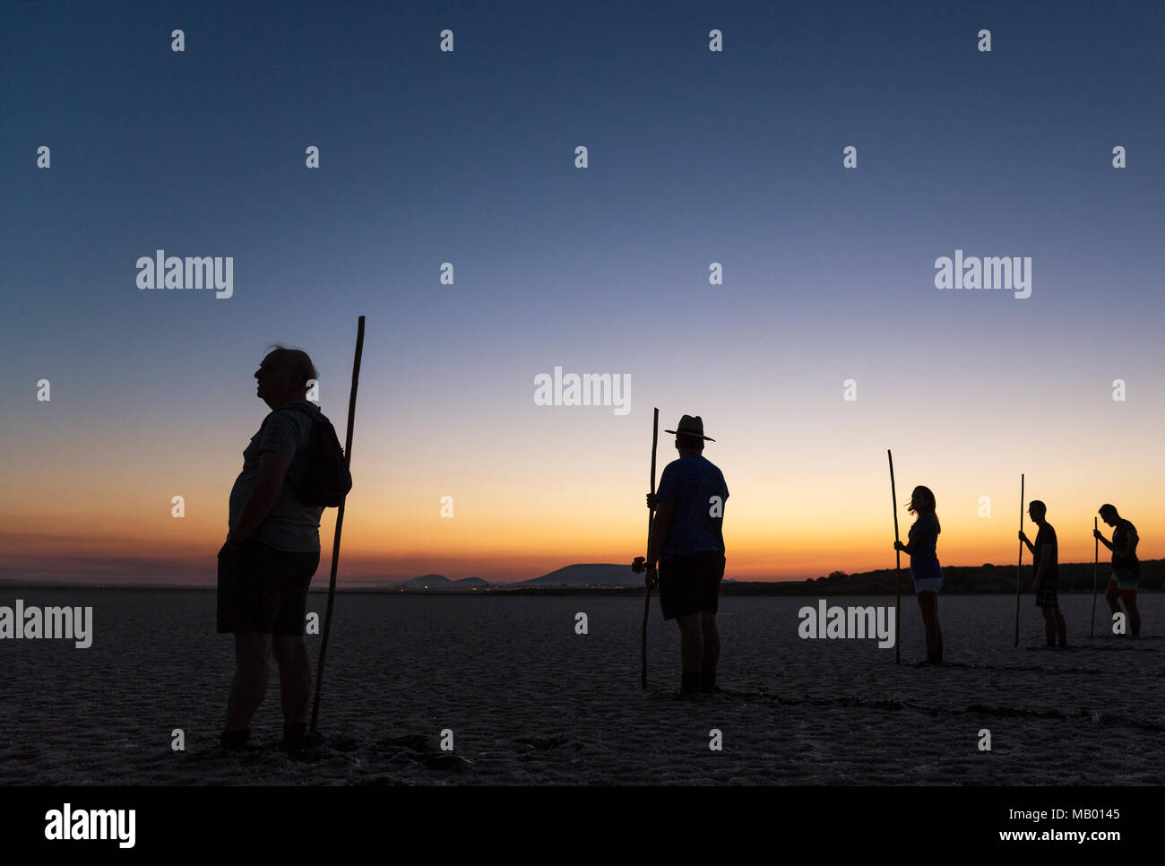 Volunteers at dawn at the Laguna de Fuente de Piedra, waiting for the start of  the immature Greater Flamingo (Phoenicopterus