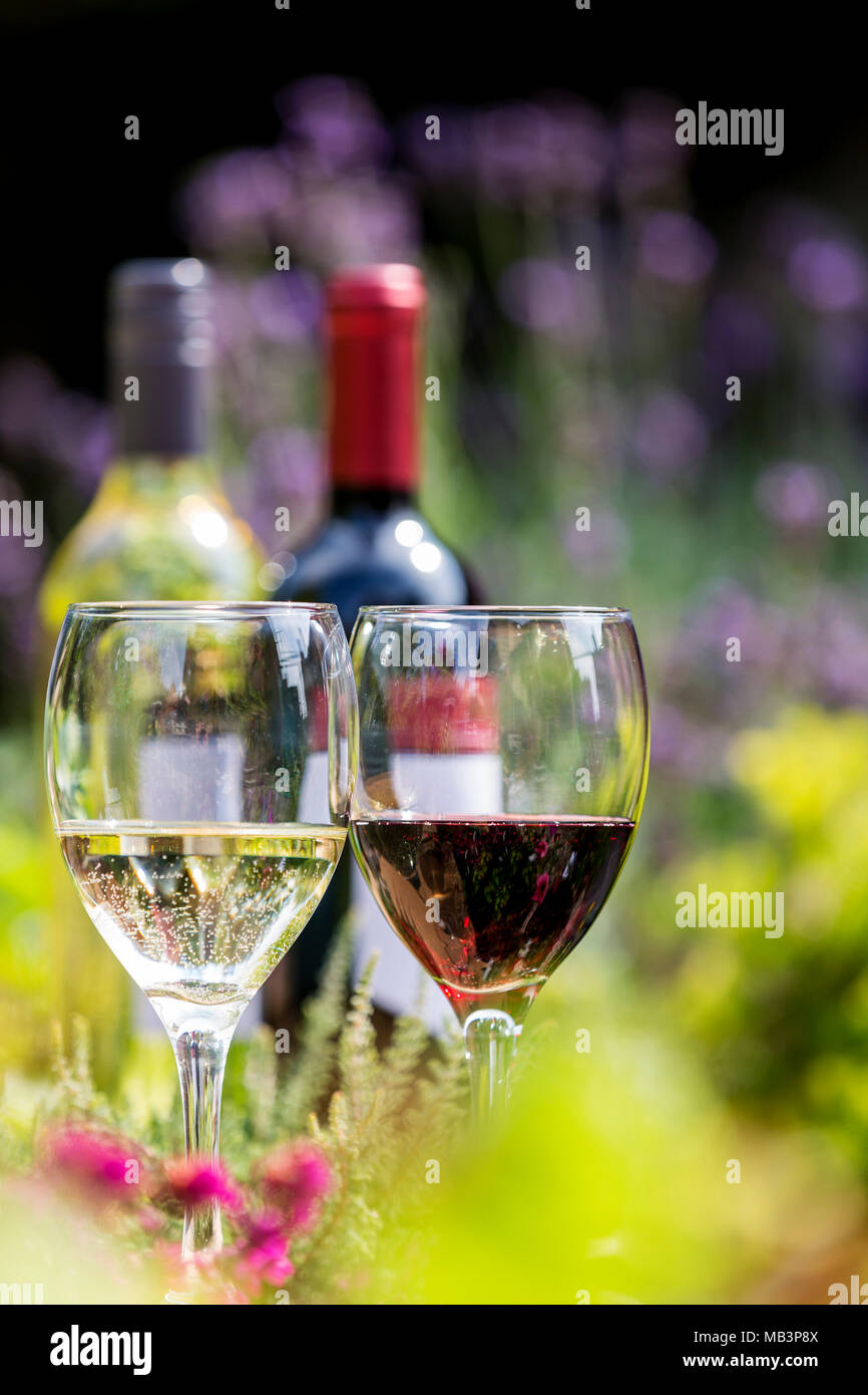 Red and white wine in glasses with bottles in background amongst red and white wine in glasses with bottles in background amongst flowers with lavender mightylinksfo