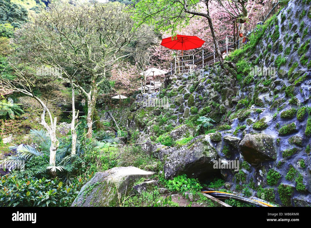 Beautiful garden scenery with cherry blossoms flowers and trees in beautiful garden scenery with cherry blossoms flowers and trees in the valley izmirmasajfo