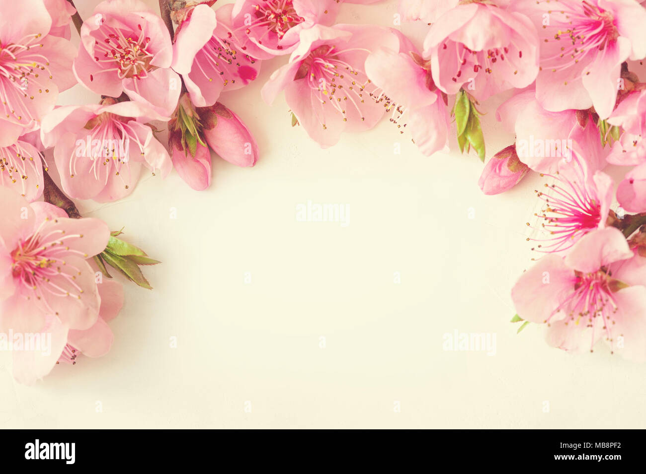 Frame of pink flowers branches leaves and lilac petals on white frame of pink flowers branches leaves and lilac petals on white background flat lay top view mightylinksfo