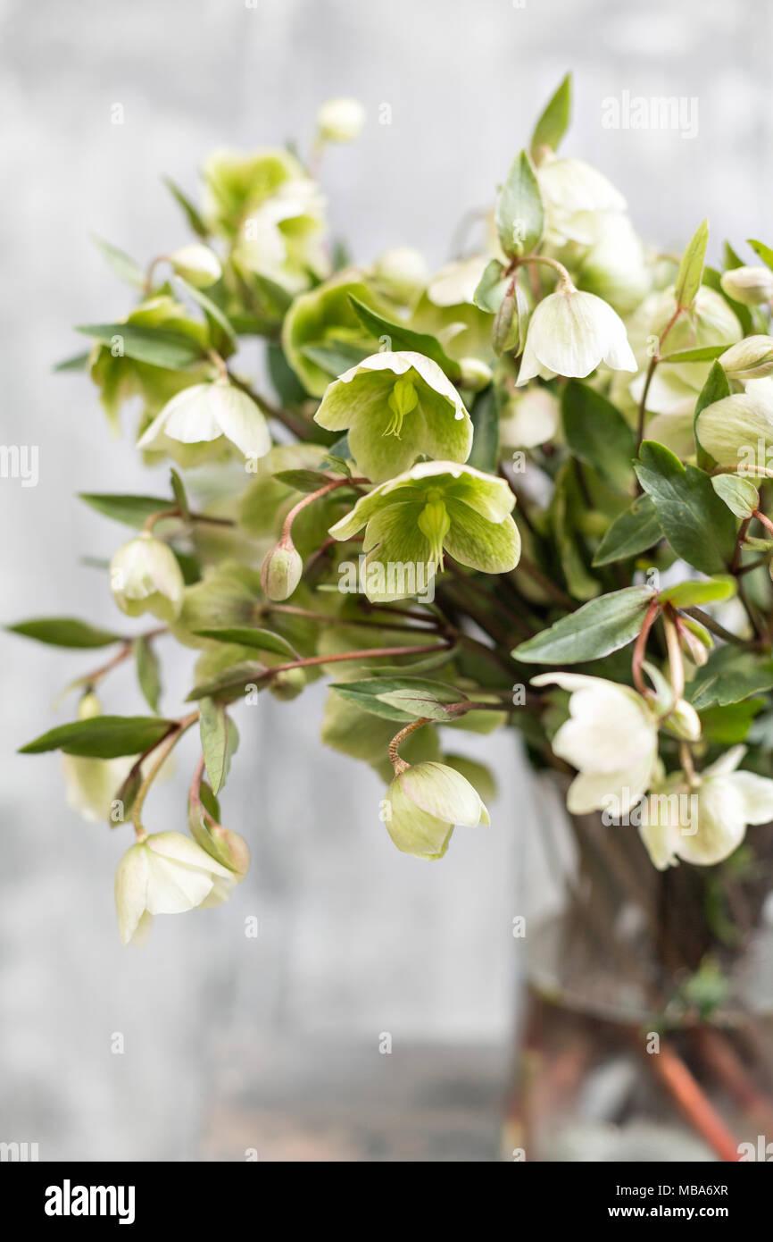 Bouquet of beautiful green helleborus winter flowers in vase on bouquet of beautiful green helleborus winter flowers in vase on wooden table wallpaper vertical photo izmirmasajfo