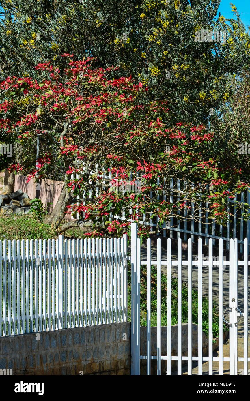 Flower garden with white wooden fence in Dalat, Vietnam Stock Photo ...