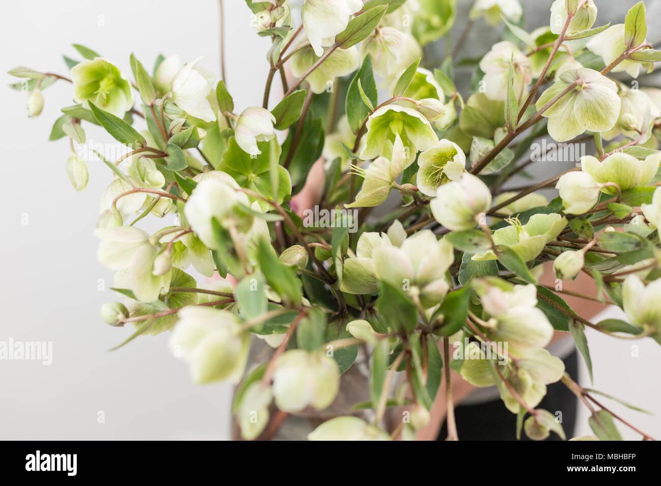 Bouquet of beautiful green helleborus winter flowers in woman hand bouquet of beautiful green helleborus winter flowers in woman hand the work of the florist at a flower shop horizontal photo izmirmasajfo