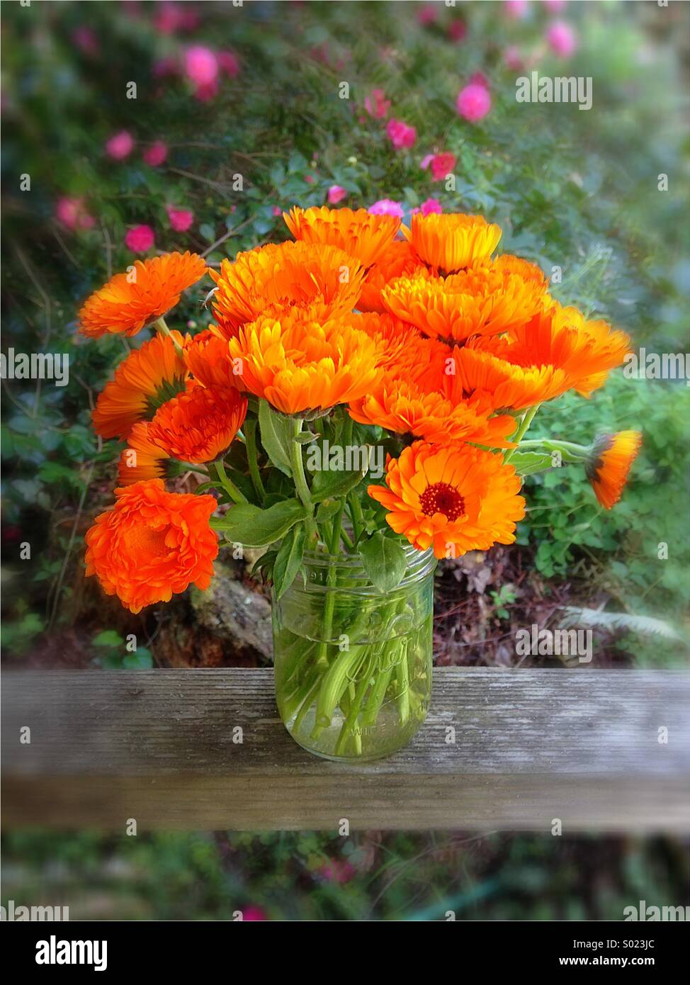 a bunch of pretty orange flowers in a vase stock photo, royalty, Beautiful flower