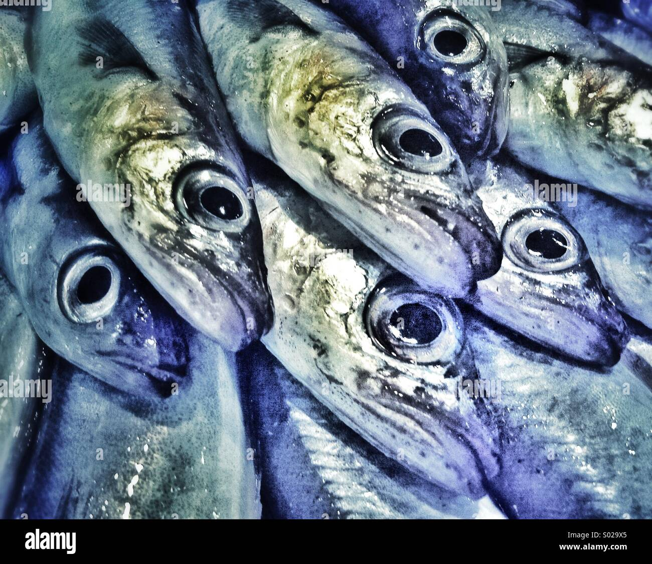 fresh-sardines-for-sale-in-a-barcelona-f