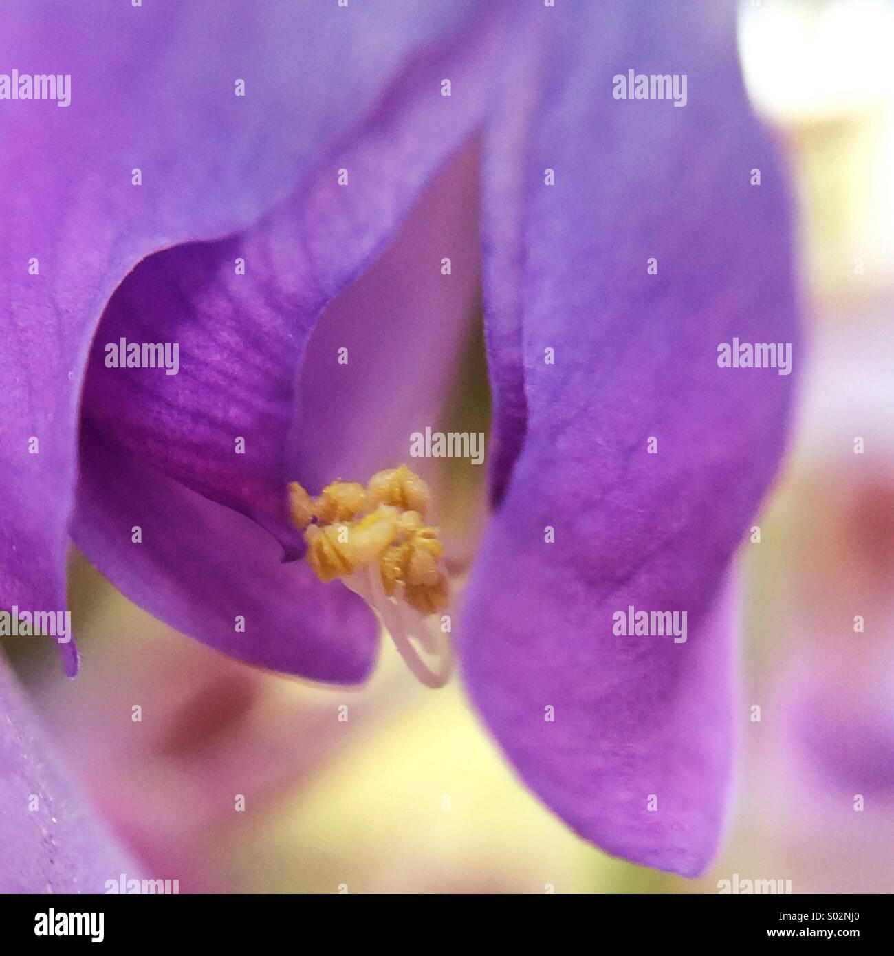 macro-of-a-wisteria-flower-S02NJ0.jpg