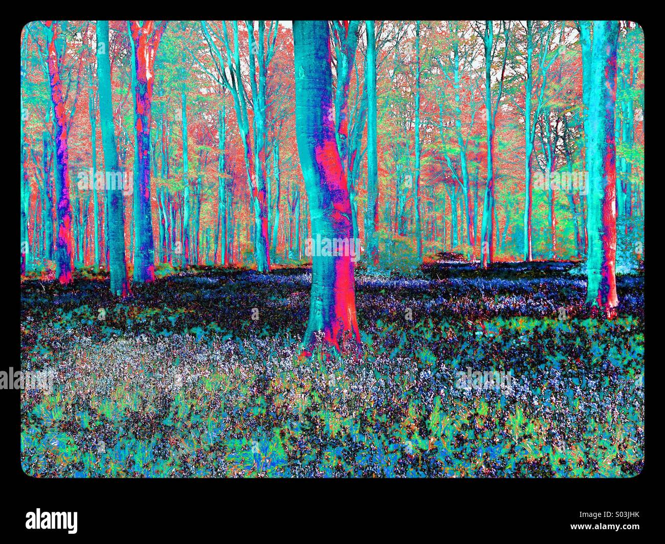 psychedelic-view-of-a-woodland-scene-con