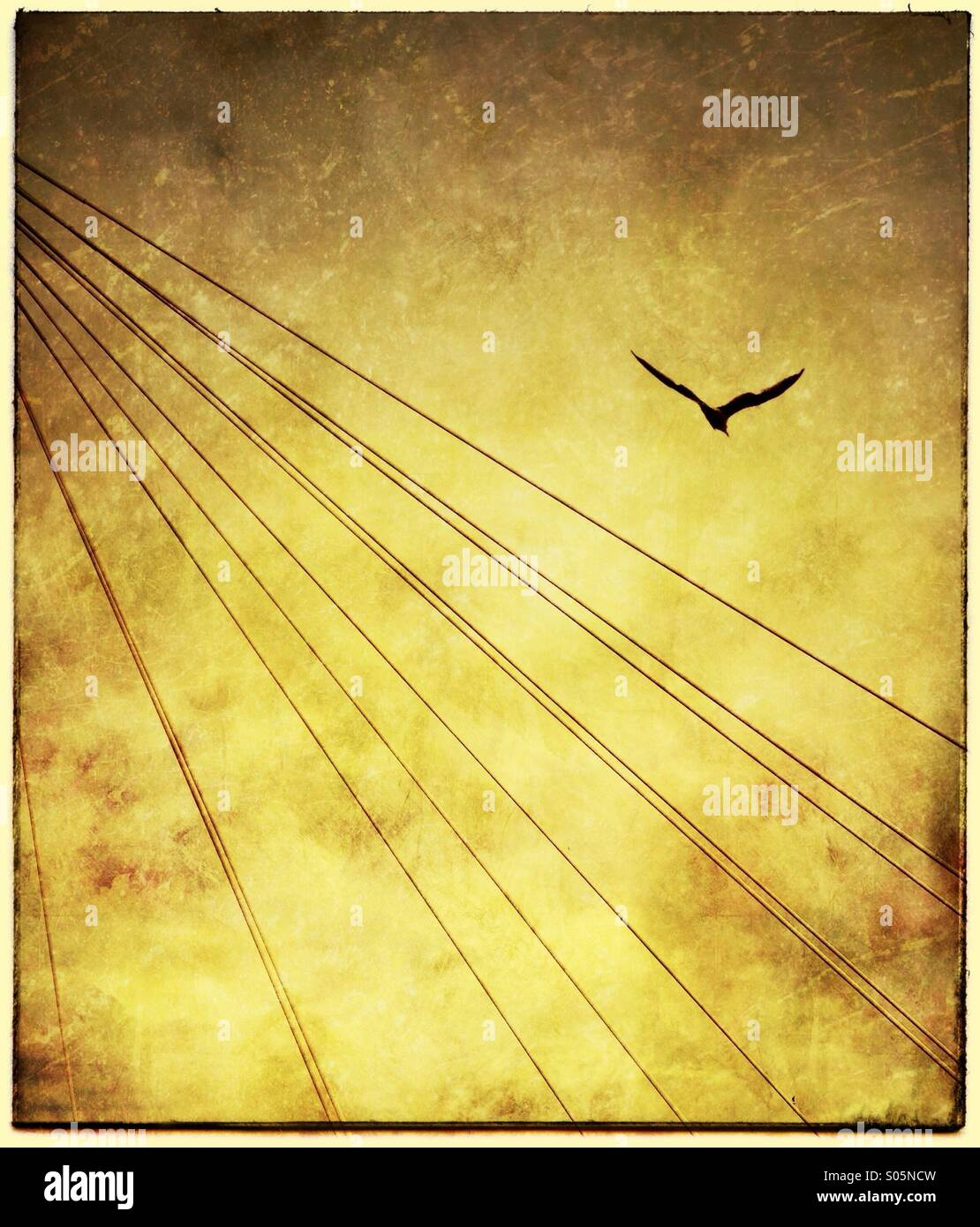 suspension-bridge-cables-and-seagull-S05
