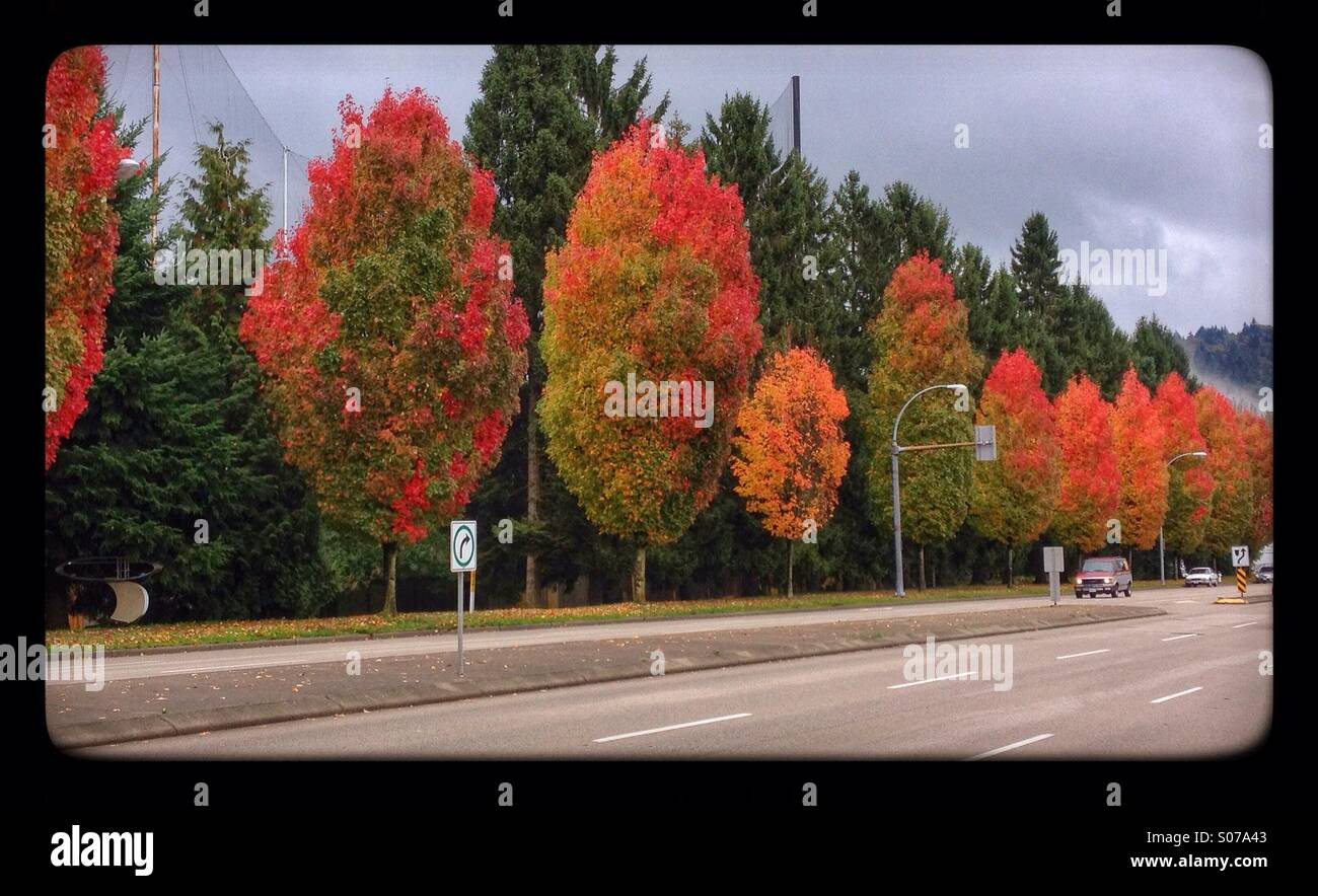 colourful-trees-in-autumn-by-the-road-in
