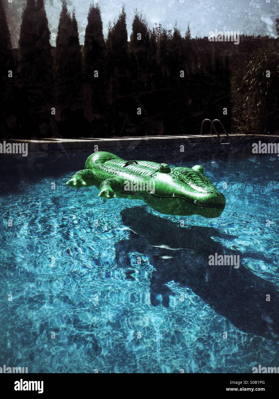 inflatable alligator pool toy floating in backyard swimming pool
