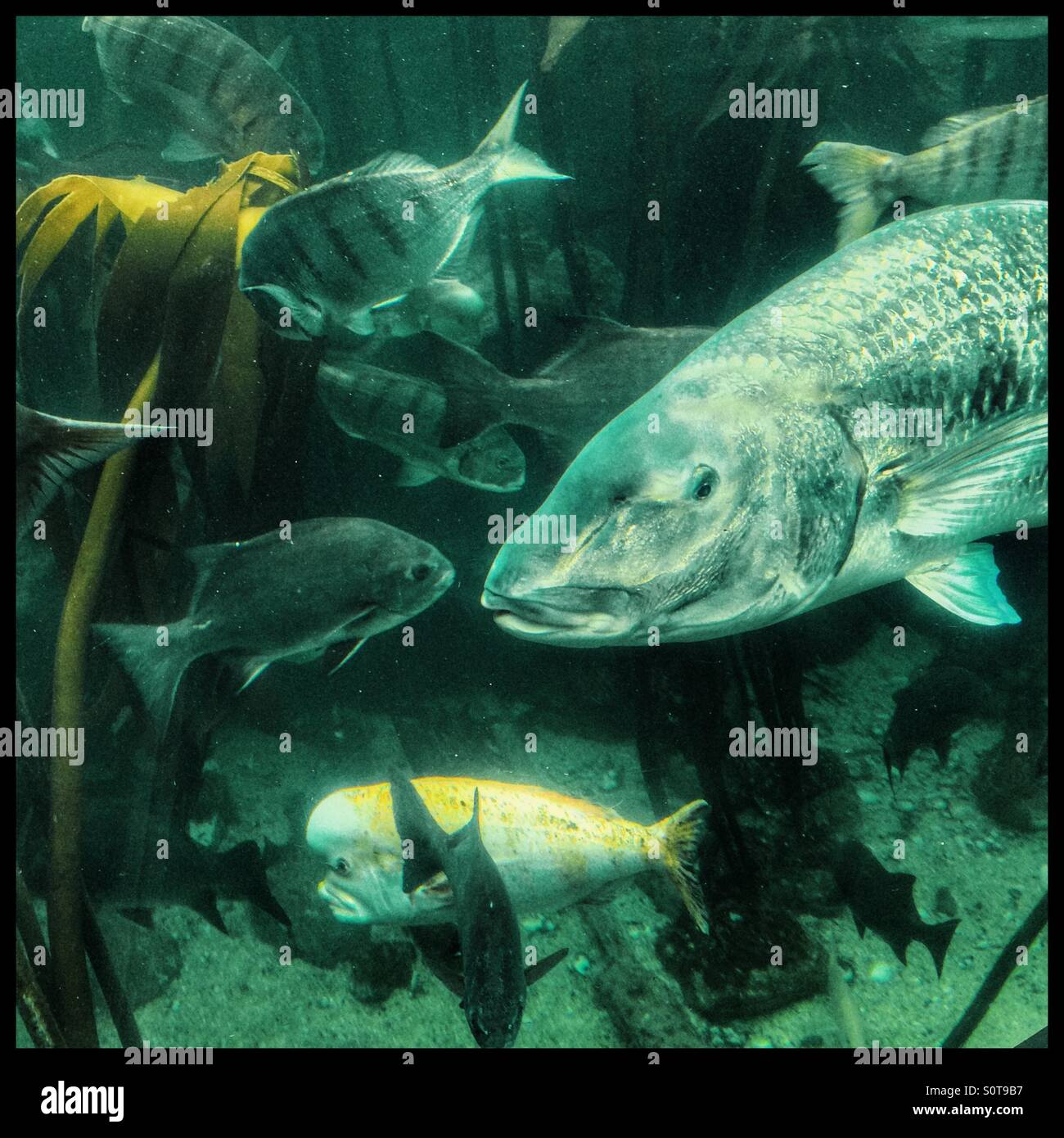 Aquarium fish tank in south africa - Fish Tank In Two Oceans Aquarium Cape Town South Africa