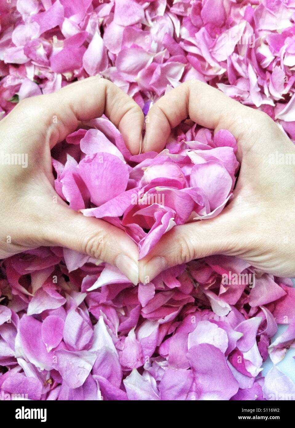 Heart love symbol made by girl hands with pink roses petals Stock ...