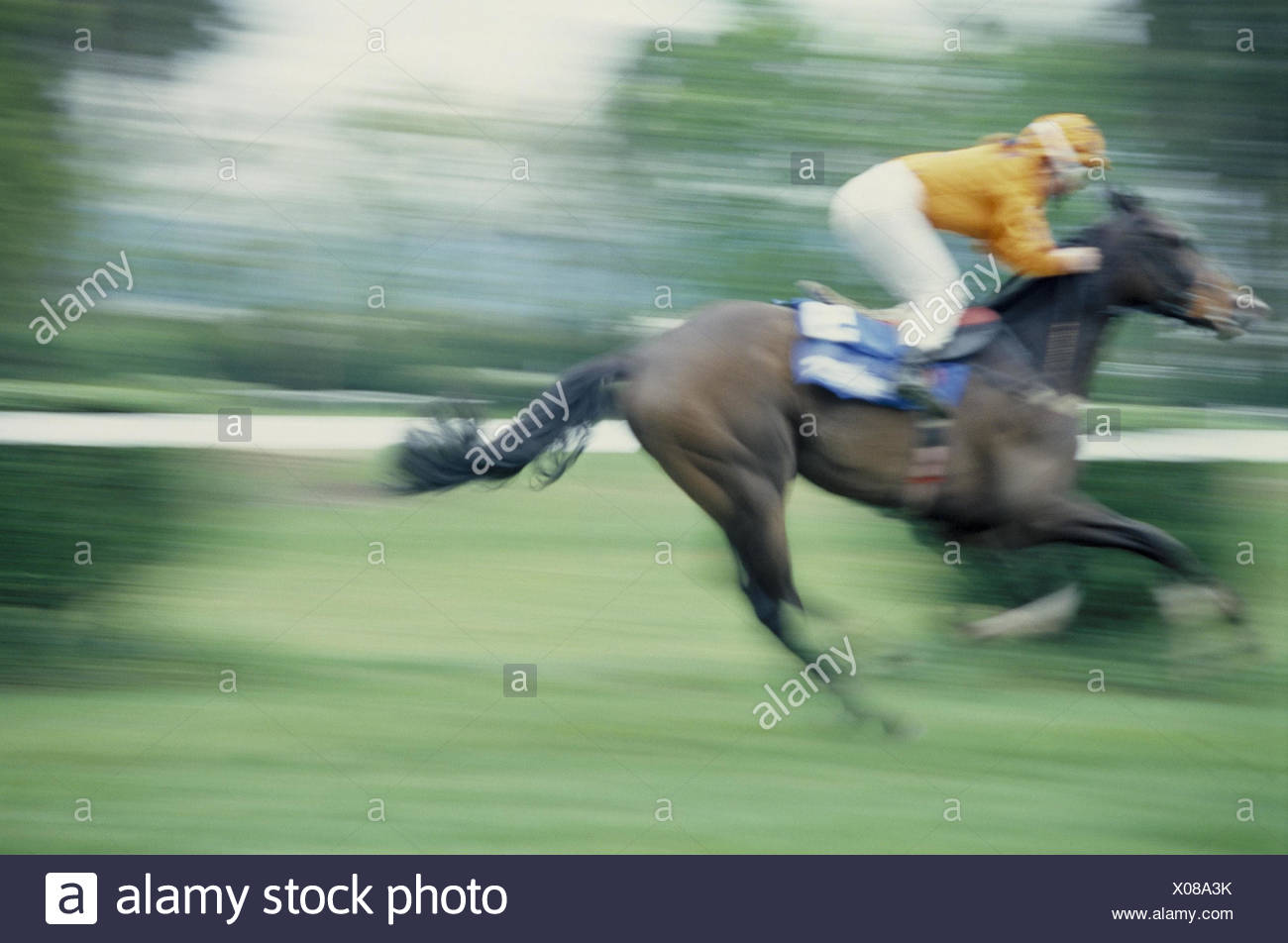 Gallop Races Bleeds Blur Side View Racecourse Horses Race Horse Riding Galopper Jockey Ride Derby