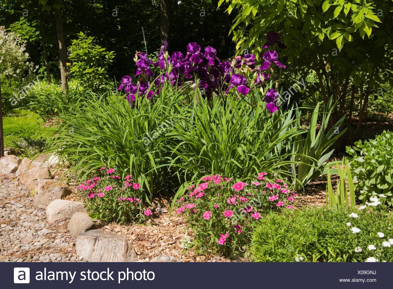 Bordered With Rocks And Purple Iris Flowers In Backyard Garden In