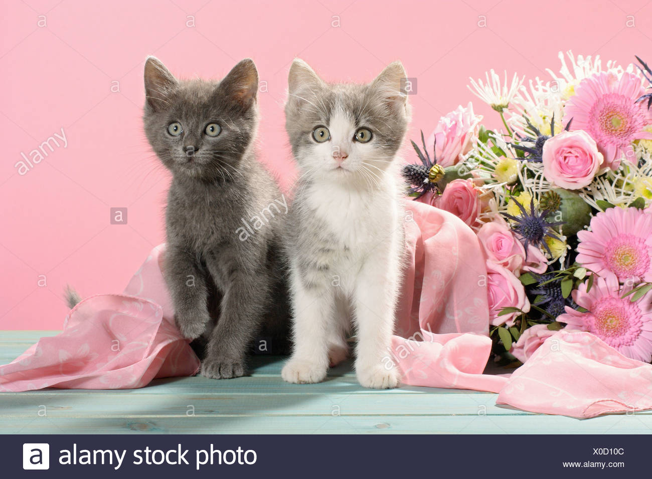 domestic cat - two kittens sitting next to a flower bouquet Stock ...