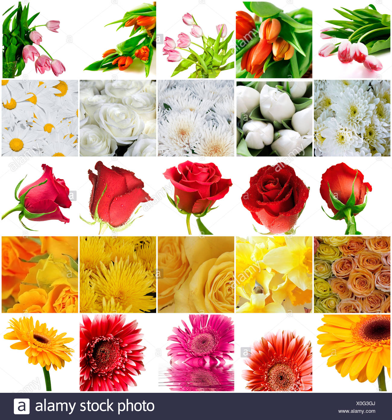 Many Beautiful Bright Flowers On A White Background Stock Photo