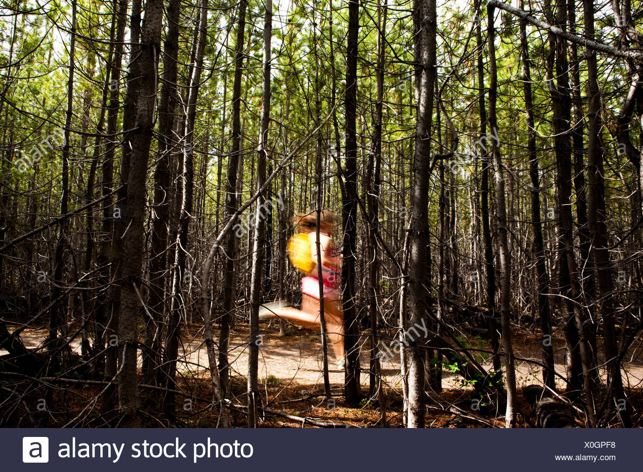autobiography of a tree in a dense forest Thinning trees intelligently and practicing informed forest stewardship can aid fire   this might be news to some: dense forests were uncommon in many regions  of  forest-management methods, see fire in america: a cultural history of.