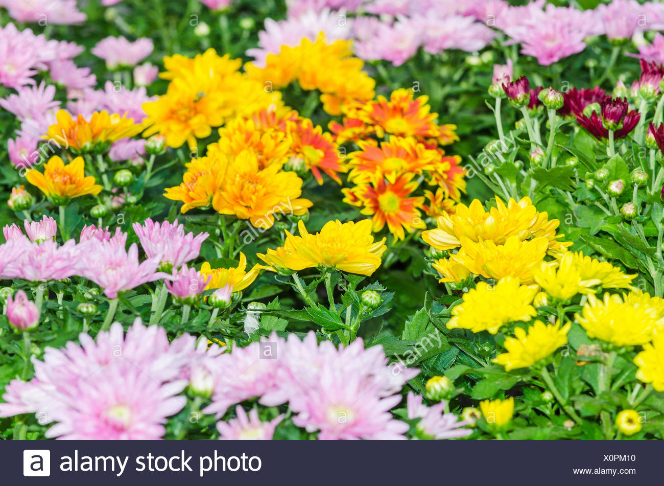 Different types of flowers stock photo 275864540 alamy different types of flowers mightylinksfo