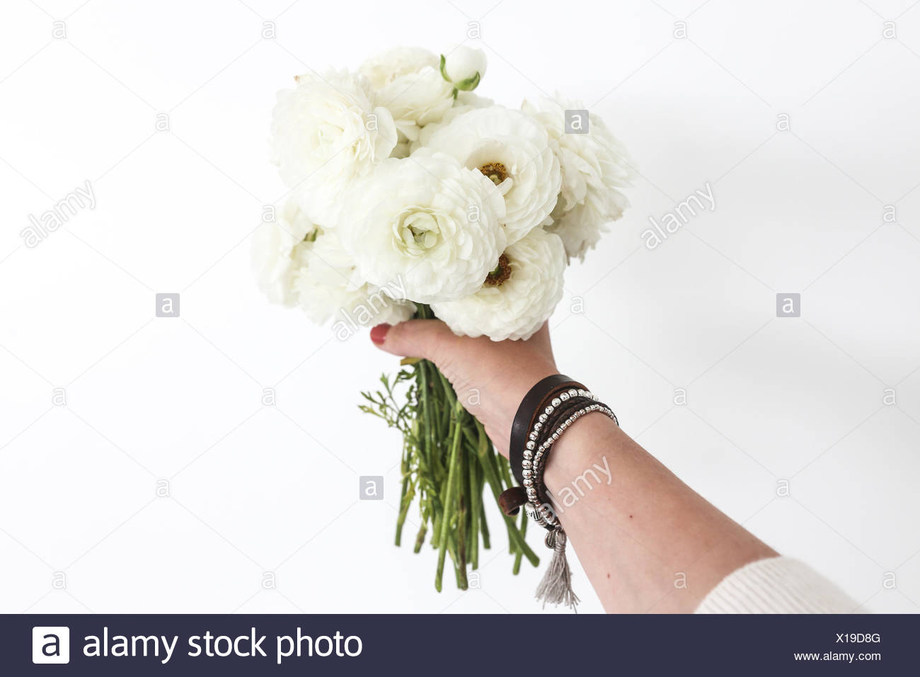 Womans Hand Holding A Bouquet Of White Ranunculus Flowers Stock