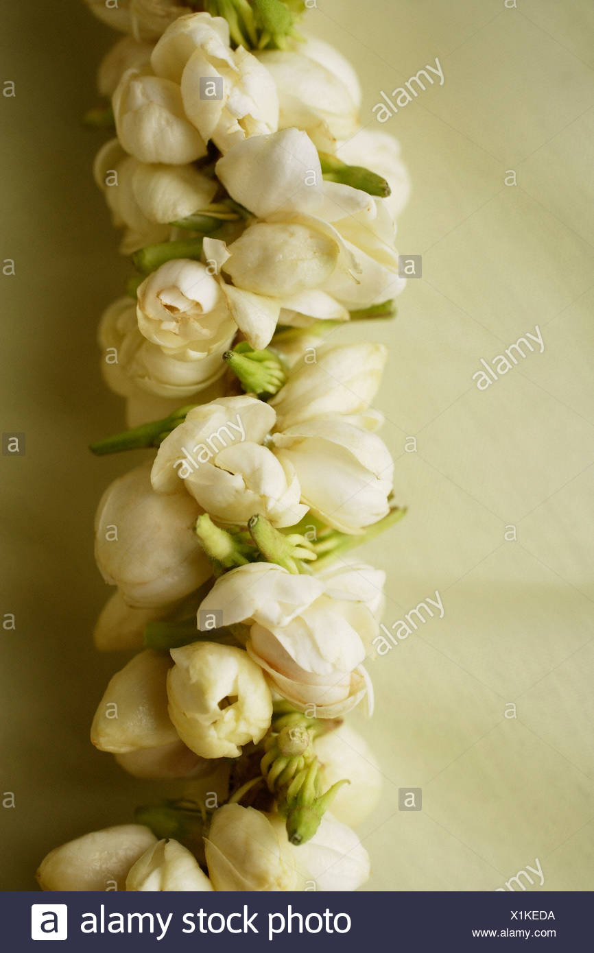 Jasmine Flower Garland Closeup Stock Photo 276408982 Alamy