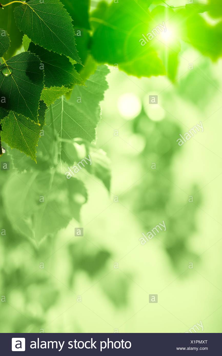 after the rain abstract seasonal backgrounds with green foliage and
