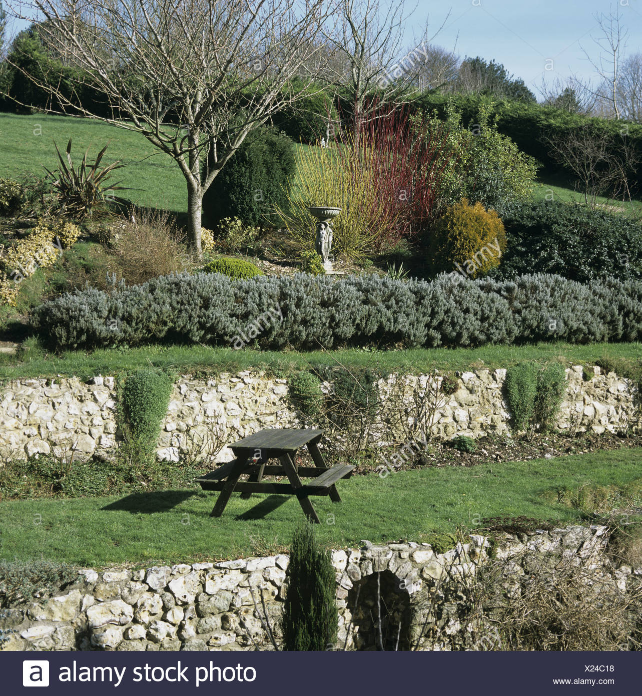 Sloping Terraced Garden With Stone Retaining Walls Leafless Shrubs And Some  Colour In Winter
