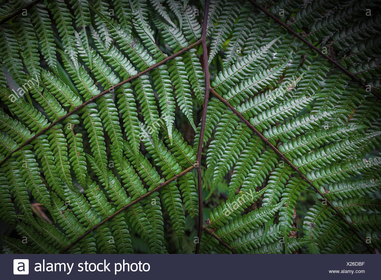 close up of fern leaves. nature texture background. macro green