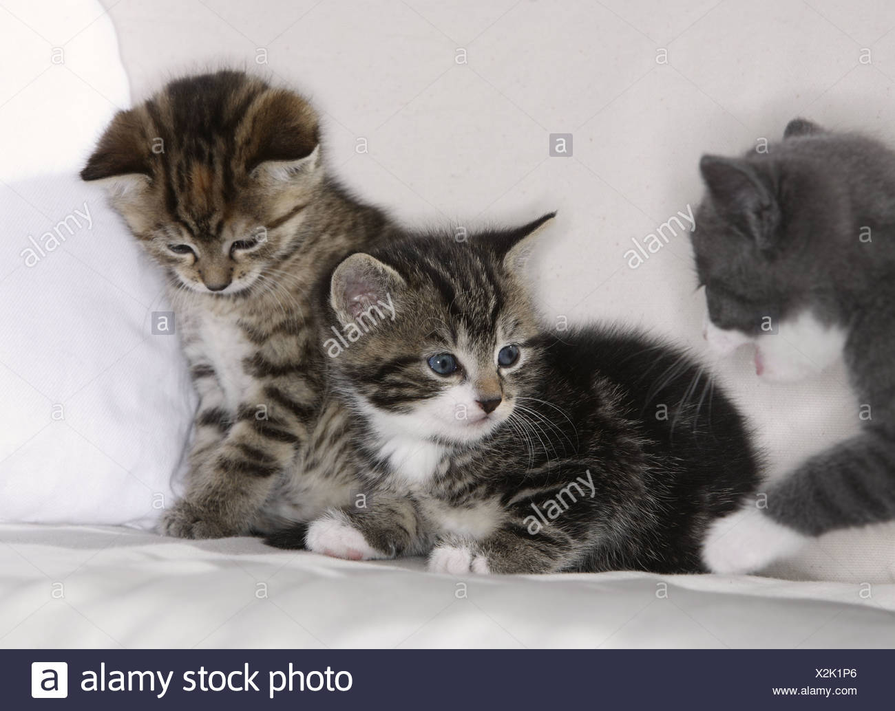 couch cats young animals mammals pets house cat cat boy cat baby