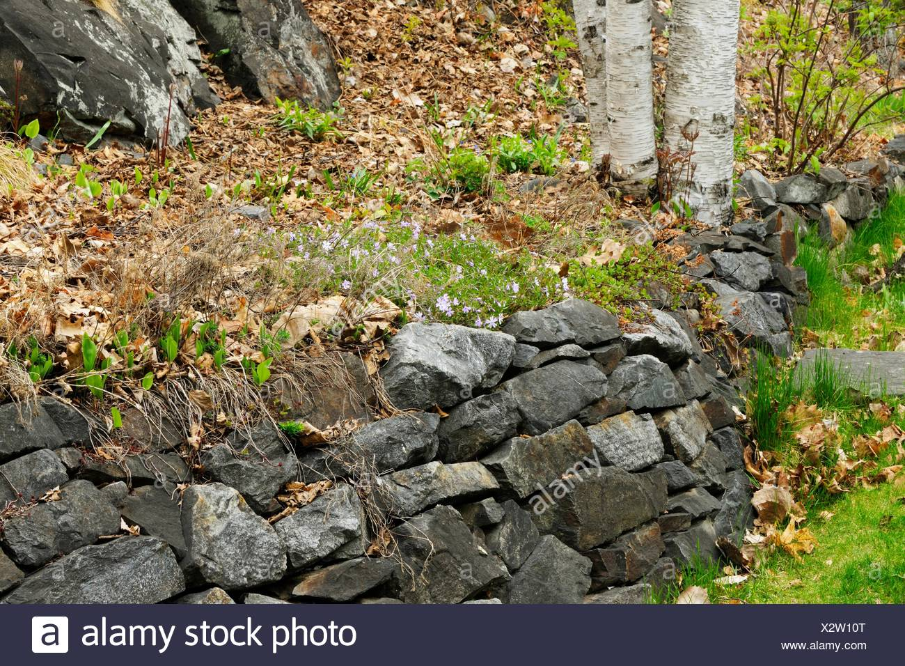 suburban residence gardens rock retaining wall and hillside
