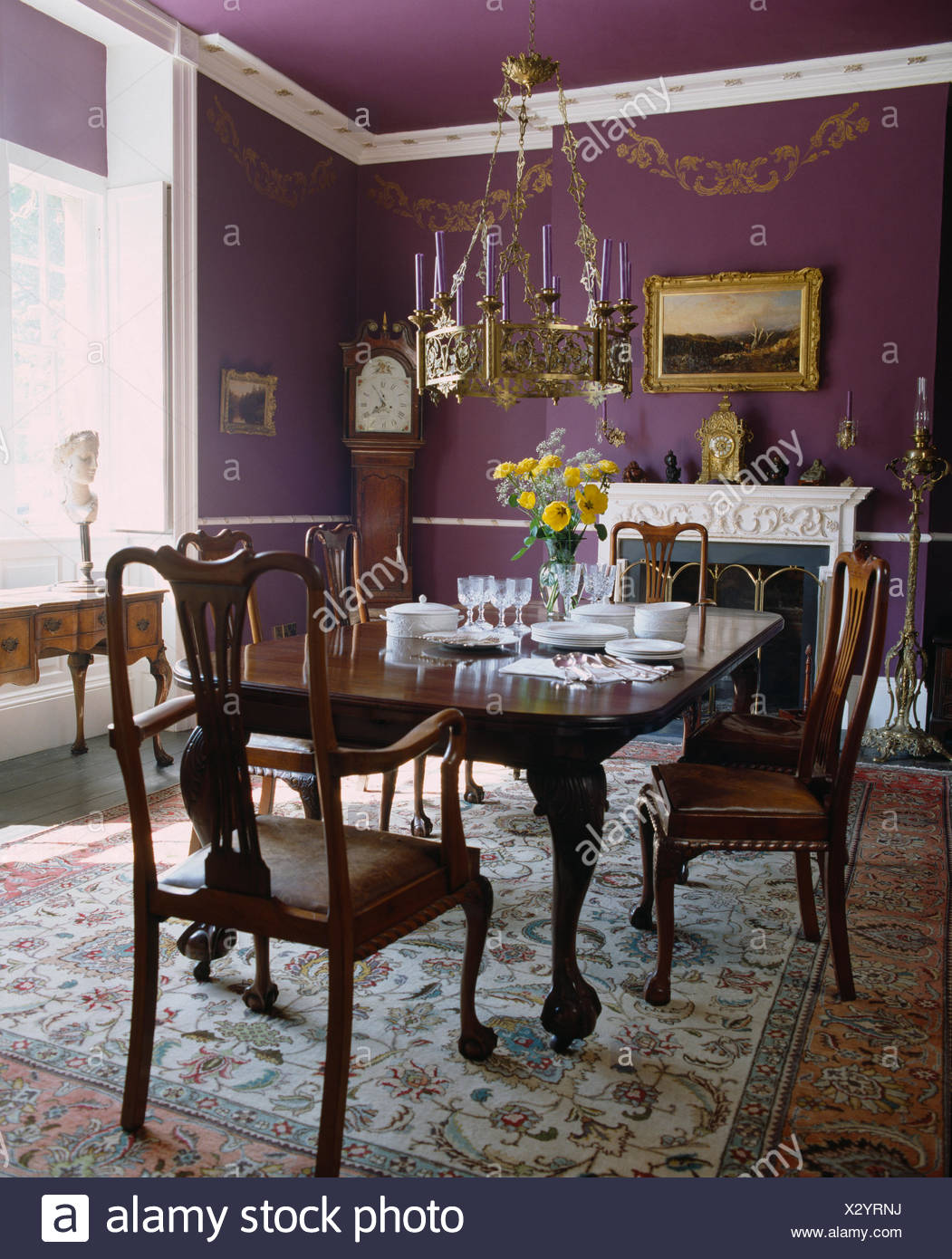 Metal Light Above Antique Mahogany Chairs And Table Set For Lunch In  Traditional Purple Dining Room With Oriental Carpet