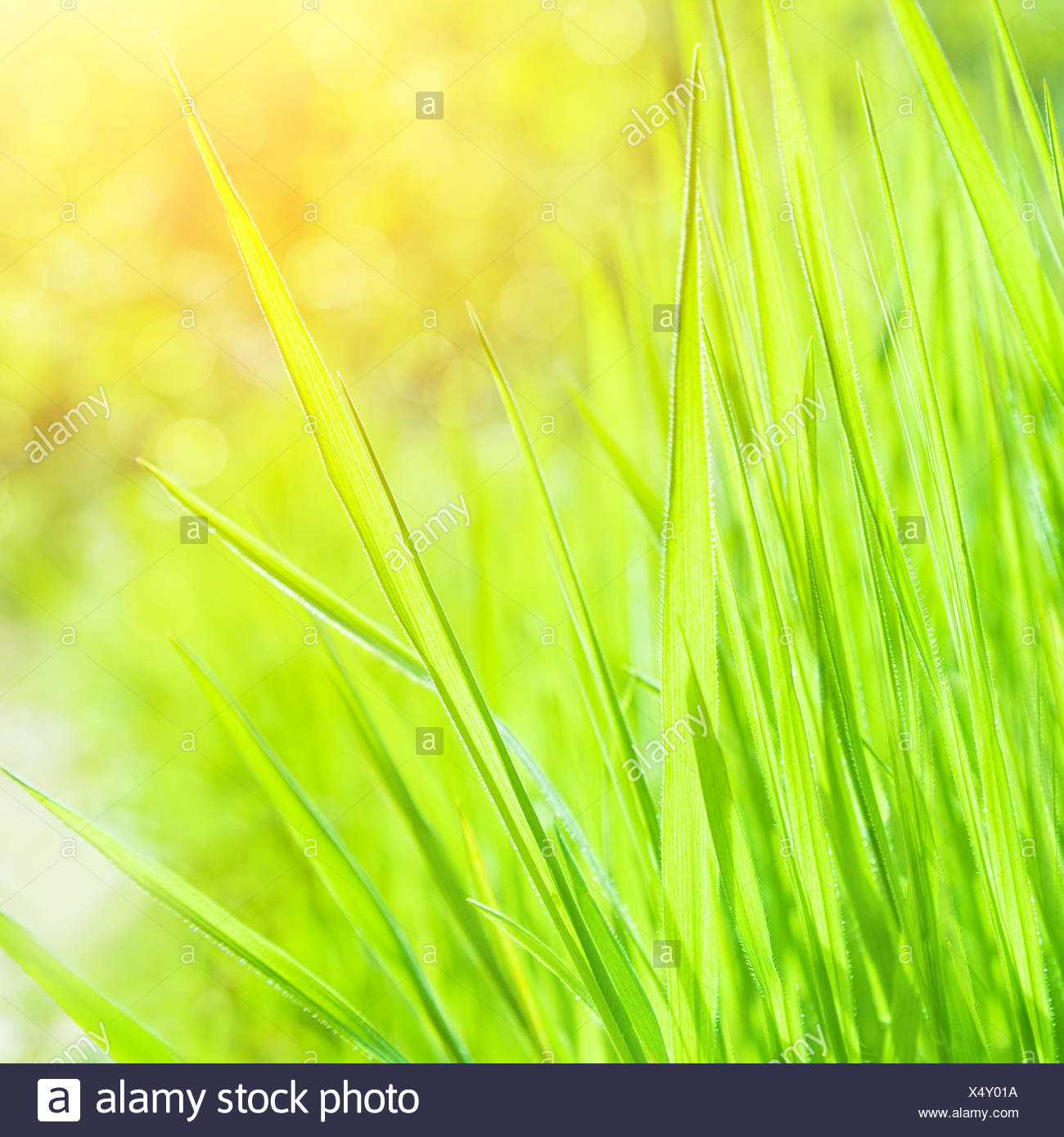 Abstract Natural Background Fresh Grass Border On Blurred Green