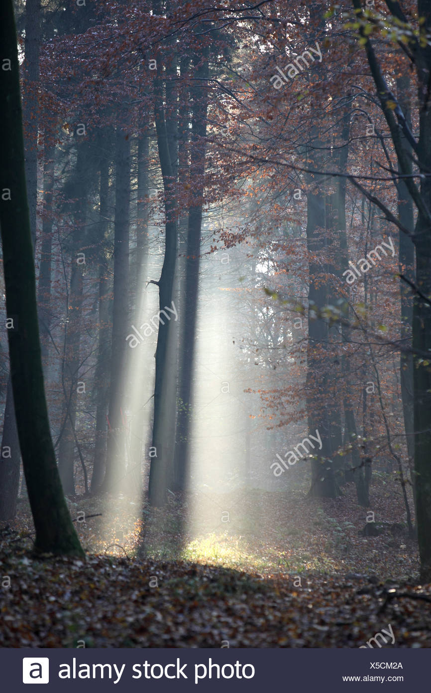 New Kätwin, Germany, Raking Light In The Forest
