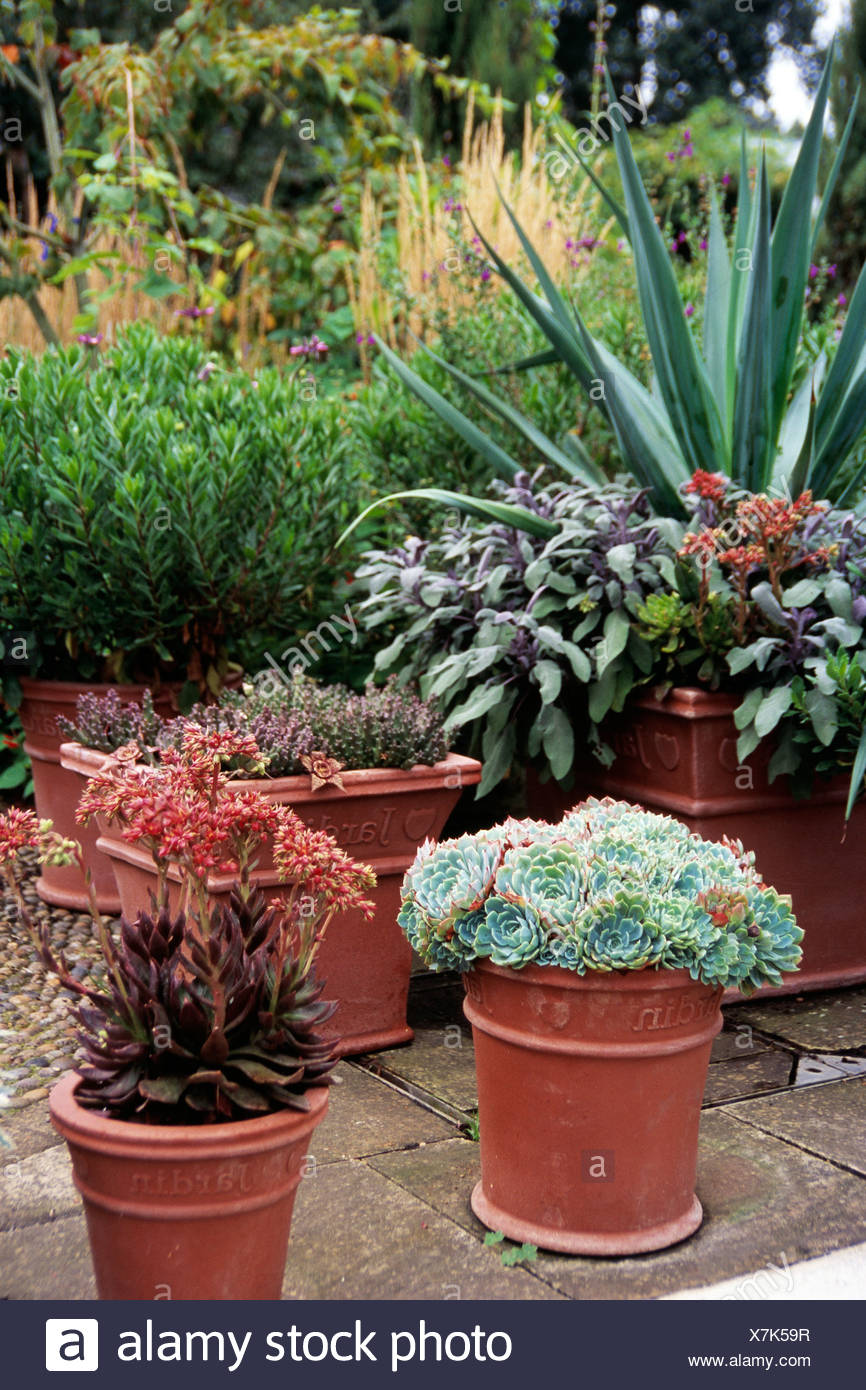 Garden Detail Image With Tiled Patio, Potted Succulent Plants, Heather,  Sage And Yukka In Background