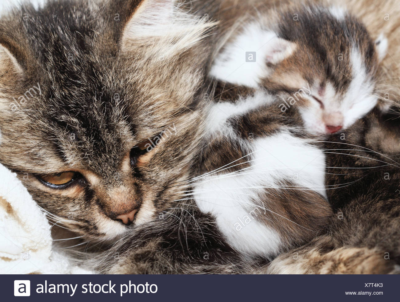 animal mammal pets mother mom ma mommy cat baby kitten