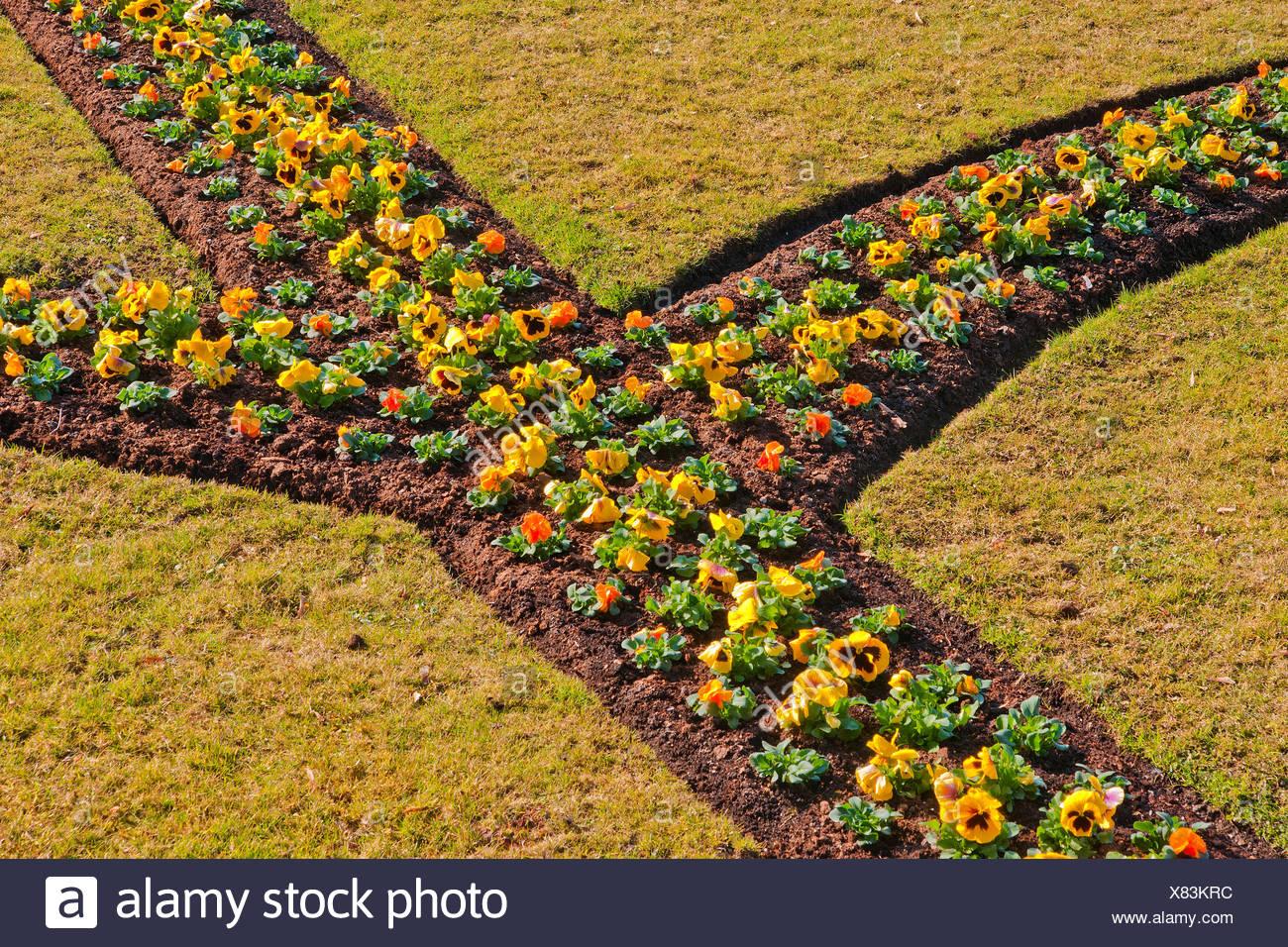 Austria, Salzburg, garden, castle garden, flowers, flowerbeds ...
