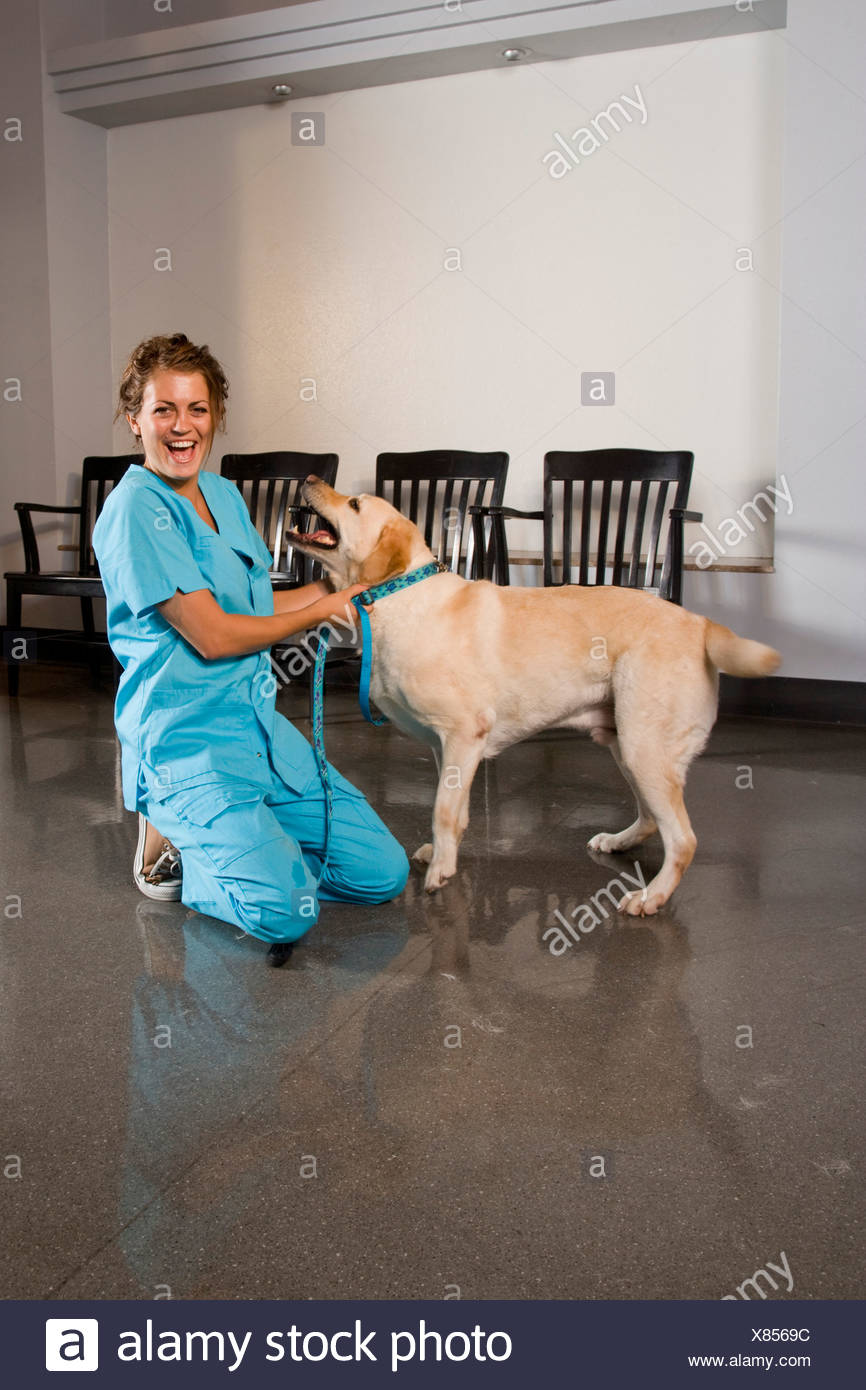 Veterinarian Assistant With Dog In Waiting Room Of Vet Clinic Stock