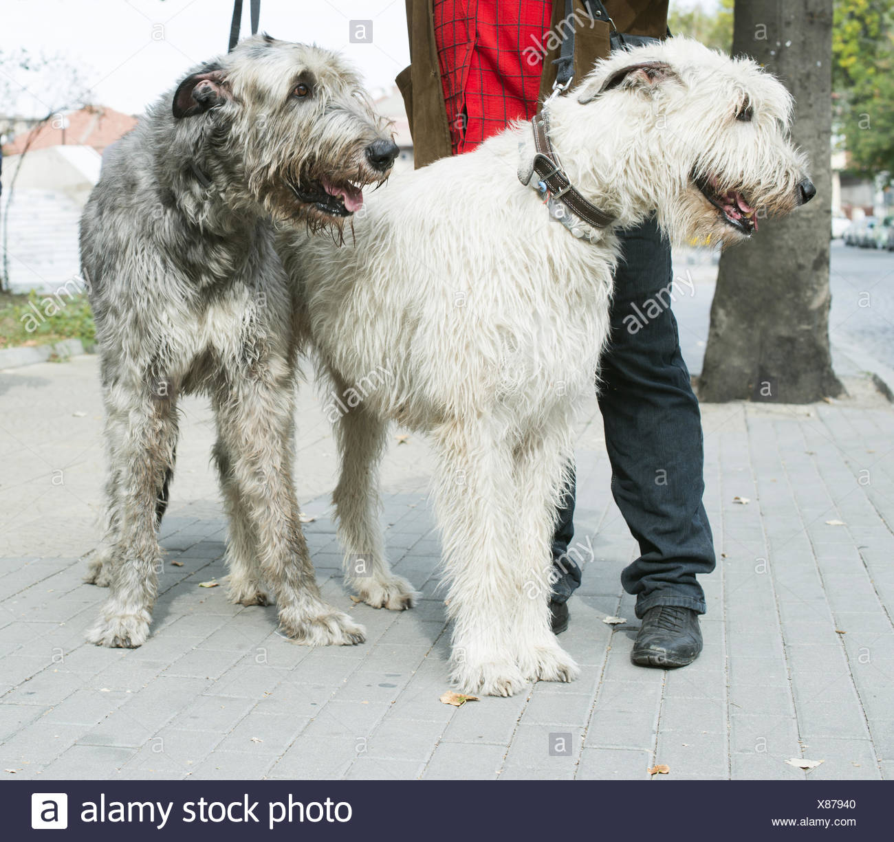 Dorable Wire Fox Terrier Mix Model - Electrical and Wiring Diagram ...