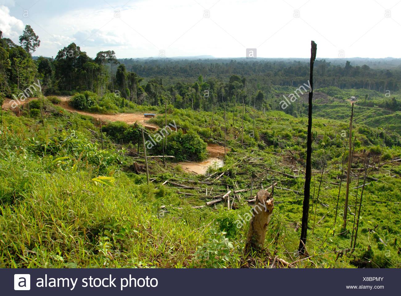 Tropical Deforestation Stock Photos Amp Tropical