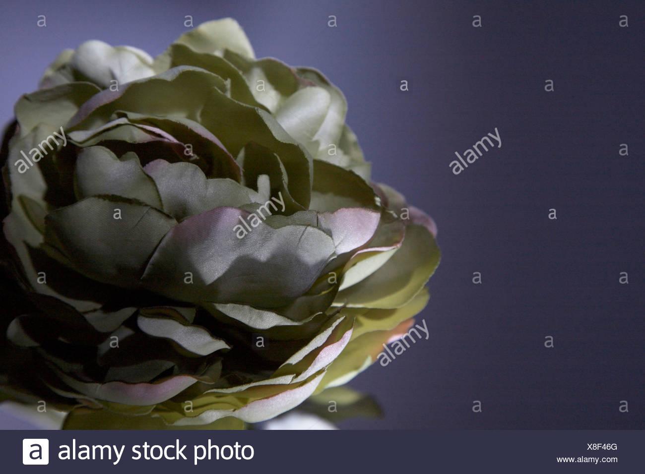 Silk flower on dark background stock photo 280615736 alamy silk flower on dark background mightylinksfo