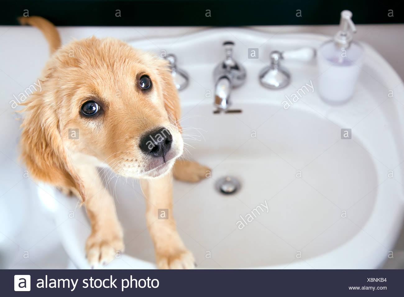 Dog In Sink
