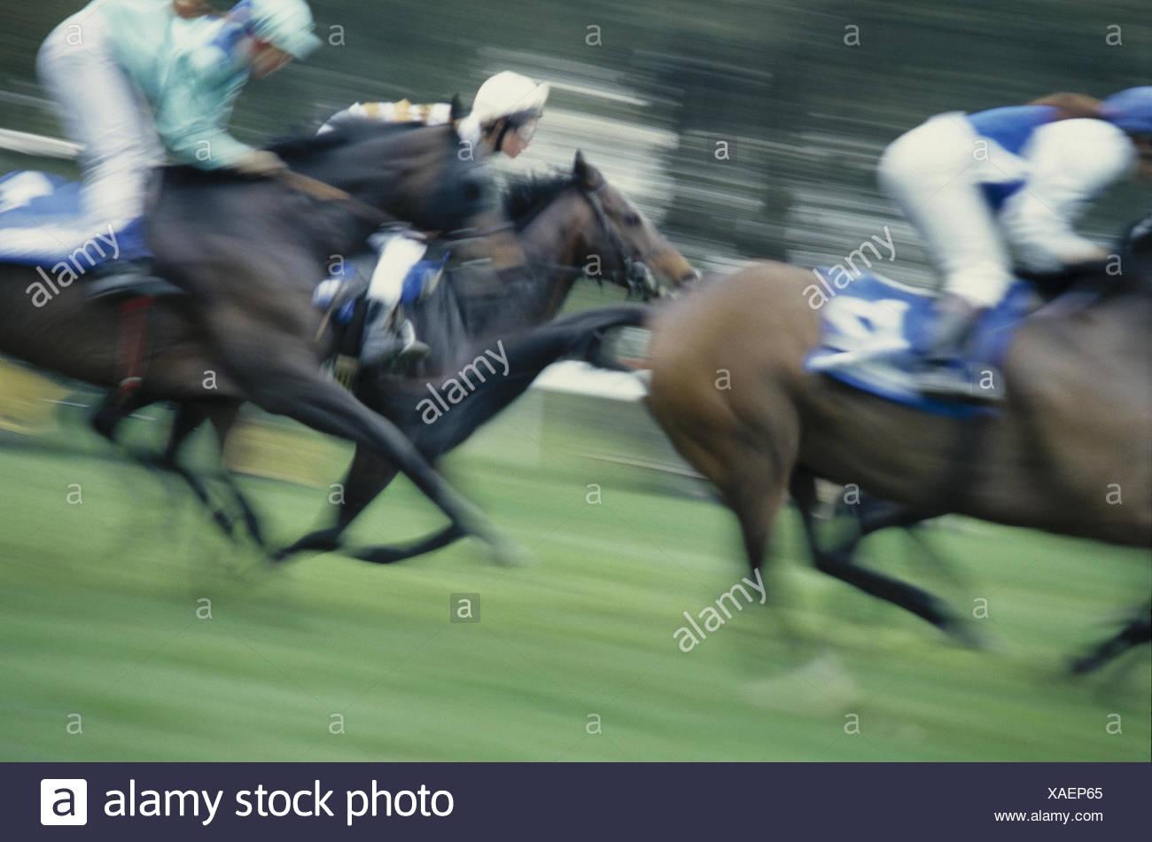 Gallop Races Detail Blur Side View Racecourse Horses Race Riding Galopper Jockeys Ride Bleed