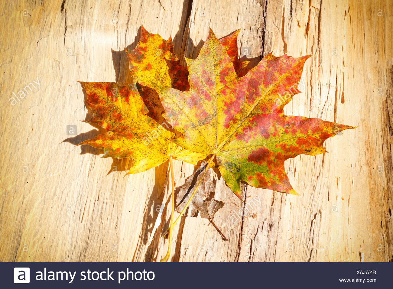 backdrop background fall autumn leaf detail art colour model