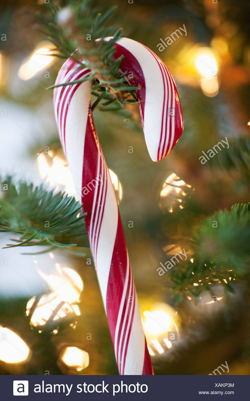 close up of candy cane hanging on christmas tree studio shot - Candy Cane Christmas Tree