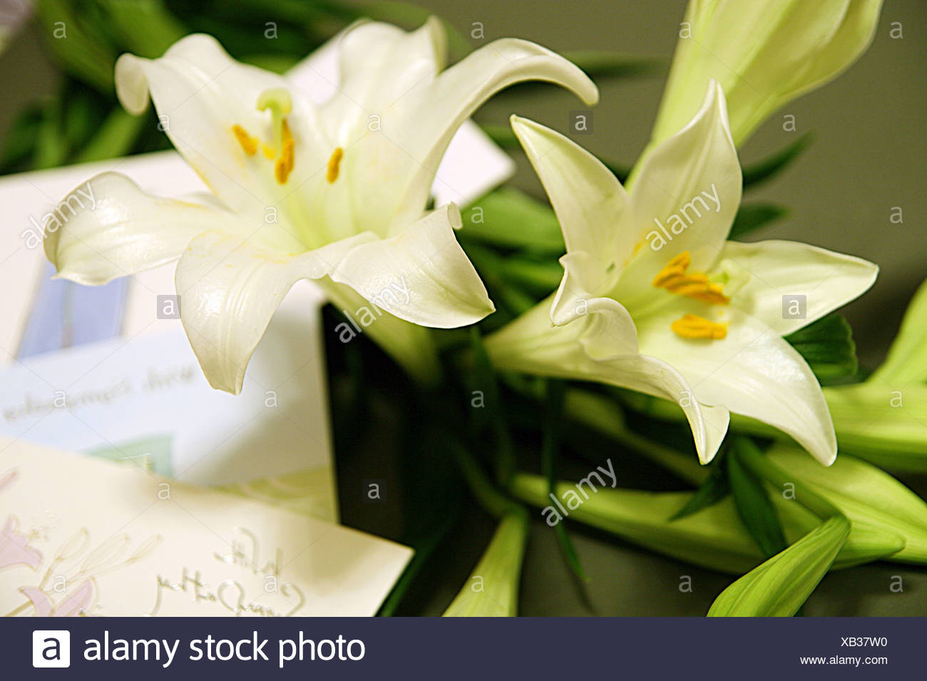 Sympathy cards stock photos sympathy cards stock images alamy white lilies and with sympathy greetings cards stock image kristyandbryce Choice Image