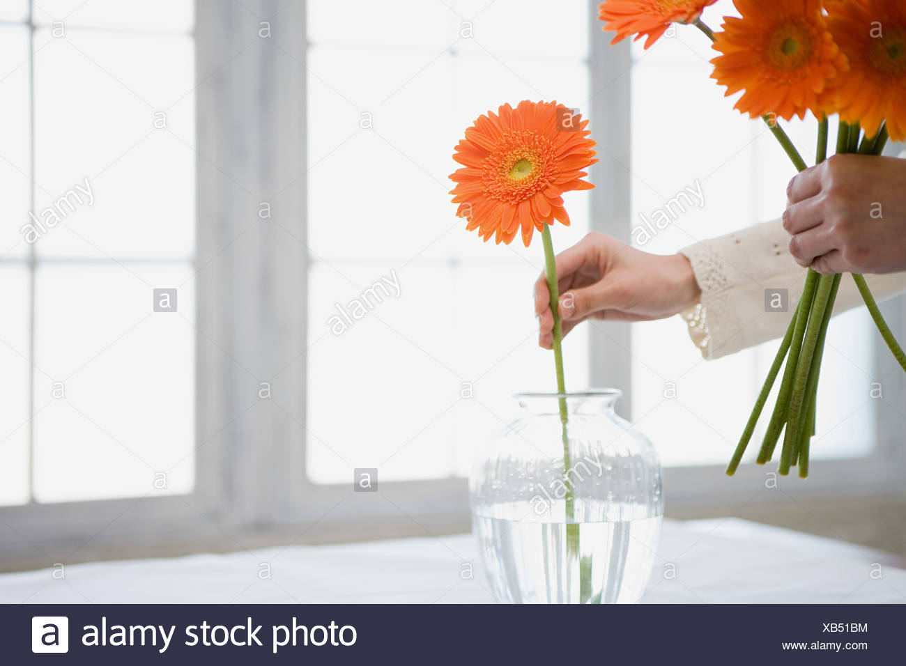 Woman placing flowers in vase Stock Photo: 282237976 - Alamy on flower bouquet, flower punch set, flower gift, flower crystal, flower arrangements, flower container, flower store, flower stand, flower trash can, flower decoration, flower painting, flower window, flower pot, flower tissue box cover, flower plant, flower decor, flower basket, flower dinnerware set, flower coloring pages, flower sign,