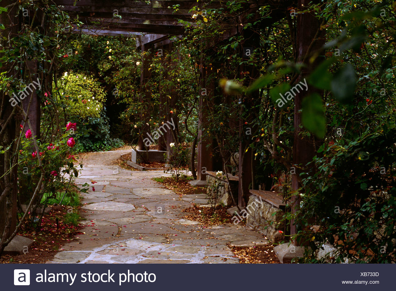 ROSE GARDEN PERGOLA WALKWAY CLIMBERS BERKELEY ROSE GARDEN BERKELEY ...